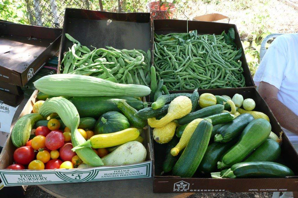 July Harvest Vegetables